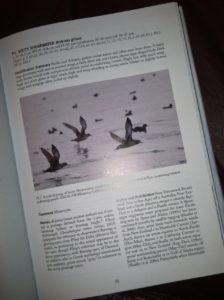 Petrels, Albatrosses & Storm-Petrels of North America species account