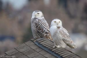Rooftop pair