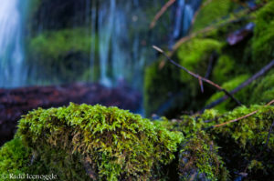 Moss-covered talus - perfect for the Coeur D'Alene Salamander